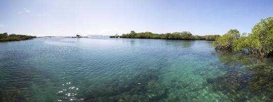 Panorama of the mangrove and the ocean, Galapagos photo