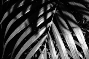 Palm leaves overlapping in sun, high contrast