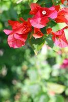 fondo de flores de azalea