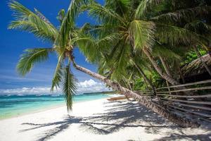 playa tropical con palmera de coco, arena blanca y turquesa foto