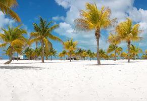 Palm trees on the white sand. Playa Sirena. Cayo Largo photo