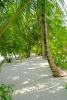 Tropical Path photo