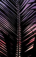 Palm leaf in sunset