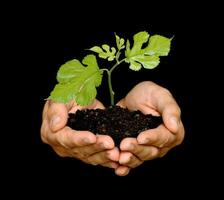 rebento nas palmas das mãos como símbolo da proteção da natureza
