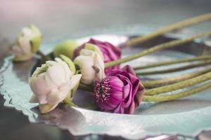 flores de lótus em um templo budista
