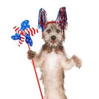 American Celebration Dog Holding Pinwheel photo