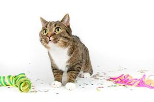 party cat photo