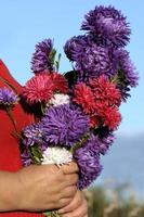 Bouquet of asters photo