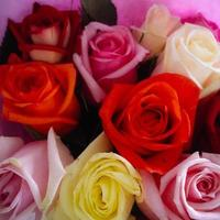 Bunch of colourful roses from above photo