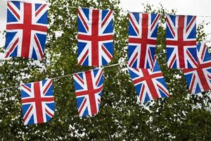 British bunting, trees in background photo