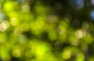 Beautiful green bokeh background. photo
