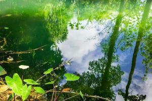 Tropical wetland photo