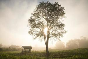 Silhoueted tree and hut in foggy morning