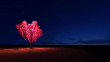 Heart tree photo
