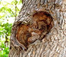 Tree Heart photo