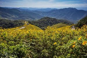 Field of Mexican Sunflower Weed on the mountain,