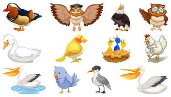 Set of different birds cartoon style isolated