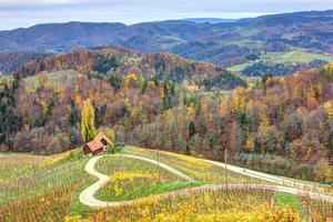 Heart road in the middle of vineyards photo