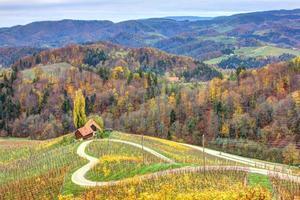 estrada do coração no meio de vinhas
