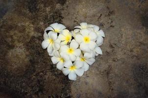 white plumeria heart shape