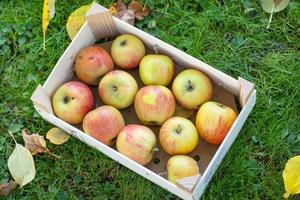 Container with fresh apples