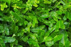 Texture of green leaves with funny shape
