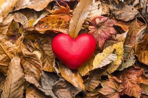 objeto em forma de coração em folhas caídas