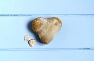 conchas marinas y piedra foto