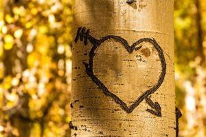 corazones de árbol de álamo