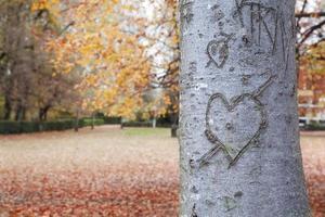 en forma de corazón en el tronco foto