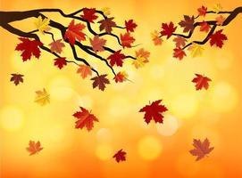 Maple Leaf Autumn Bokeh Background vector