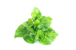 berros frescos vegetales orgánicos