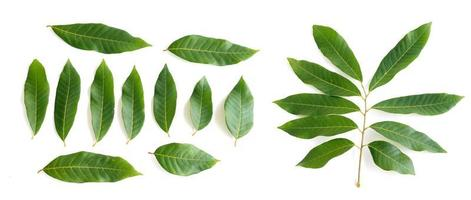 Longan fruit leaves set on white background