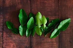 feuilles de lime kaffir vert frais