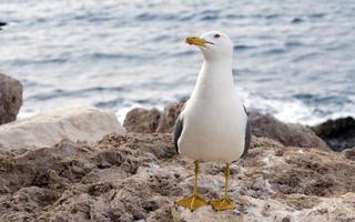 Seagull at the sea photo
