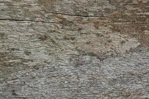 Old wood pattern texture photo