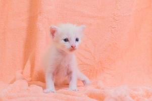un lindo gatito en una toalla foto
