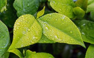 folhas verdes depois da chuva