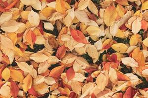 Fallen dried leaves