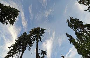 fond d'écran avec des conifères sur fond de ciel nuageux