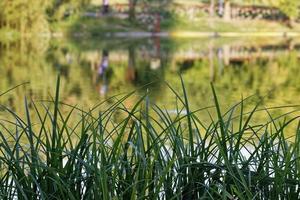 groen gras op de oever van het meer