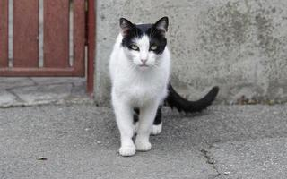Cat on street photo