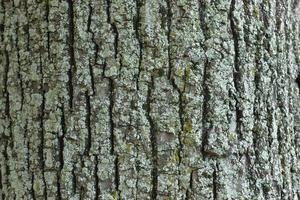 boomschors met korstmossen