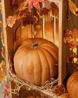 abóbora de halloween em uma caixa de madeira