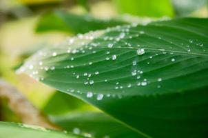 Water drop on the leaf photo