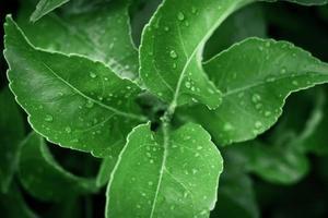 hojas con gotas de agua