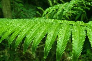 Fern leaf with water drops