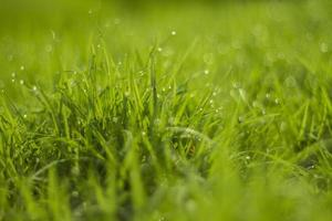 water drop on green grass