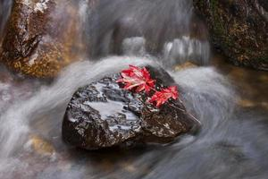 agua que fluye con colores otoñales
