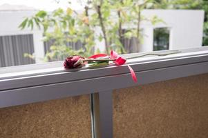 Dry roses on the window sill.